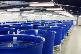 Aquaculture system design consultants